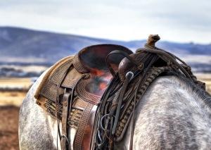 saddle-horse-cowboy-western-53136
