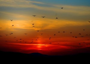 sunset-birds-flying-sky-70577
